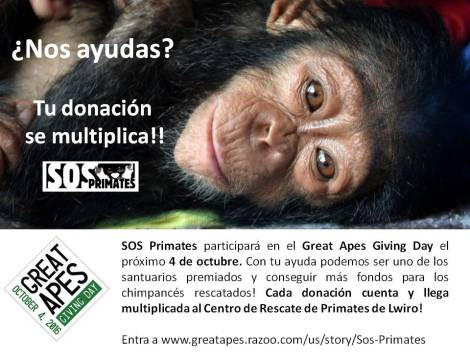 great-apes-giving-day-2016_sos-primates